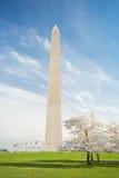 Άνθη κερασιών στο μνημείο της Ουάσιγκτον στο συνεχές ρεύμα στοκ εικόνες