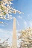 Άνθη κερασιών στο μνημείο της Ουάσιγκτον στο συνεχές ρεύμα στοκ εικόνα