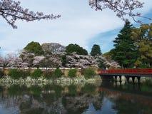 Άνθη κερασιών στο πάρκο κάστρων στοκ εικόνα