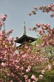 Άνθη κερασιών στο πάρκο της Κίνας Στοκ φωτογραφία με δικαίωμα ελεύθερης χρήσης