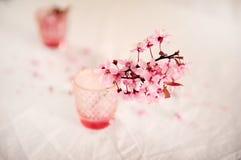 Άνθη κερασιών στο ροζ στοκ εικόνα