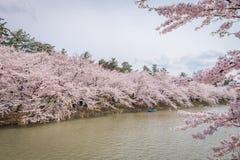 Άνθη κερασιών την άνοιξη σε Hirosaki Castle, νομαρχιακό διαμέρισμα Aomori, J Στοκ εικόνα με δικαίωμα ελεύθερης χρήσης