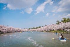 Άνθη κερασιών την άνοιξη σε Hirosaki Castle, νομαρχιακό διαμέρισμα Aomori, J Στοκ Εικόνες