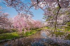 Άνθη κερασιών την άνοιξη σε Hirosaki Castle, νομαρχιακό διαμέρισμα Aomori, J Στοκ φωτογραφίες με δικαίωμα ελεύθερης χρήσης