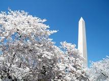 Άνθη κερασιών της Ουάσιγκτον μπροστά από το μνημείο 2010 της Ουάσιγκτον Στοκ φωτογραφία με δικαίωμα ελεύθερης χρήσης