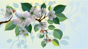 άνθη μήλων Στοκ εικόνα με δικαίωμα ελεύθερης χρήσης