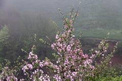 Άνθη οπωρωφόρων δέντρων Αρχή της άνοιξη στοκ εικόνες