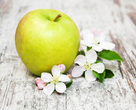 Άνθη της Apple και δέντρων μηλιάς Στοκ Φωτογραφίες