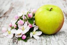 Άνθη της Apple και δέντρων μηλιάς Στοκ Εικόνα