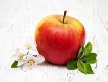 Άνθη της Apple και δέντρων μηλιάς Στοκ φωτογραφίες με δικαίωμα ελεύθερης χρήσης
