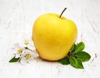 Άνθη της Apple και δέντρων μηλιάς Στοκ εικόνες με δικαίωμα ελεύθερης χρήσης