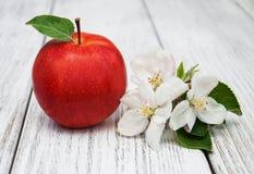 Άνθη της Apple και δέντρων μηλιάς Στοκ εικόνα με δικαίωμα ελεύθερης χρήσης