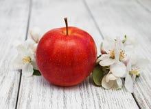 Άνθη της Apple και δέντρων μηλιάς Στοκ Εικόνες