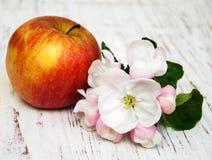 Άνθη της Apple και δέντρων μηλιάς Στοκ φωτογραφία με δικαίωμα ελεύθερης χρήσης