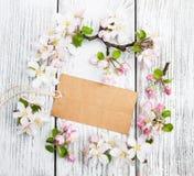 Άνθη της Apple με την κάρτα Στοκ εικόνα με δικαίωμα ελεύθερης χρήσης