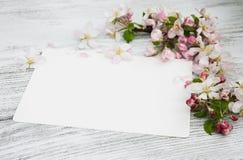 Άνθη της Apple με την κάρτα Στοκ Εικόνες