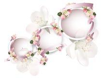 Άνθη της Apple με τις κορδέλλες Στοκ εικόνα με δικαίωμα ελεύθερης χρήσης