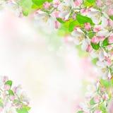 Άνθη της Apple πέρα από το θολωμένο υπόβαθρο φύσης Στοκ φωτογραφίες με δικαίωμα ελεύθερης χρήσης