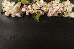 Άνθη της Apple σε ένα μαύρο ξύλινο υπόβαθρο Κλάδος ι δέντρων της Apple Στοκ Φωτογραφίες