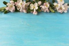 Άνθη της Apple σε ένα μπλε ξύλινο υπόβαθρο Στοκ φωτογραφία με δικαίωμα ελεύθερης χρήσης