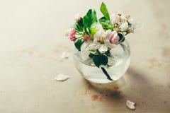 Άνθη της Apple στο βάζο γυαλιού Στοκ Φωτογραφία