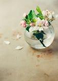 Άνθη της Apple στο βάζο γυαλιού Στοκ φωτογραφίες με δικαίωμα ελεύθερης χρήσης