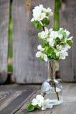 Άνθη της Apple στο βάζο στον ξύλινο πάγκο Στοκ Εικόνες