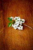 Άνθη της Apple στο ξύλινο υπόβαθρο Στοκ φωτογραφία με δικαίωμα ελεύθερης χρήσης