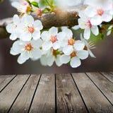 Άνθη της Apple την άνοιξη και κενός ξύλινος πίνακας γεφυρών. Στοκ εικόνες με δικαίωμα ελεύθερης χρήσης