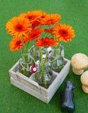 Άνθη του gerbera στα μικρά βάζα στοκ φωτογραφία με δικαίωμα ελεύθερης χρήσης