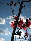 άνθη Στοκ Εικόνες