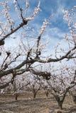 άνθη Στοκ φωτογραφία με δικαίωμα ελεύθερης χρήσης