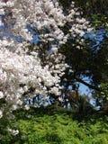 Άνθη Στοκ Φωτογραφία