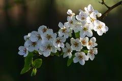 άνθη Στοκ φωτογραφίες με δικαίωμα ελεύθερης χρήσης