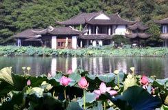 Άνθη Lotus στη δυτική λίμνη, Hangzhou, Zhejiang, Κίνα Στοκ Φωτογραφία