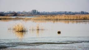 άνθισε πράσινος χλόης θάμνων που αναπτύχθηκε έχει το νέο παλαιό δέντρο άνοιξη ακτών φύλλων λιμνών Στοκ φωτογραφία με δικαίωμα ελεύθερης χρήσης
