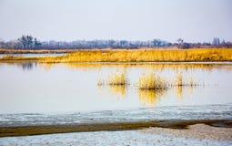 άνθισε πράσινος χλόης θάμνων που αναπτύχθηκε έχει το νέο παλαιό δέντρο άνοιξη ακτών φύλλων λιμνών Στοκ Εικόνες