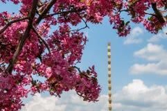 άνθισης ρόδινο δέντρο μνημείων στηλών ατελείωτο Στοκ φωτογραφία με δικαίωμα ελεύθερης χρήσης