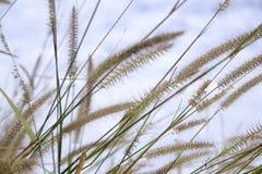 άνθιση λουλουδιών γυαλιού στη φύση στο κλίμα μπλε ουρανού στοκ εικόνες με δικαίωμα ελεύθερης χρήσης