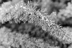 Άνθιση λουλουδιών με τα πράσινα φύλλα στο φυσικό υπόβαθρο Κλάδος με το άσπρο άνθος, άνοιξη Άνθος, άνθιση, άνθισμα στοκ φωτογραφία
