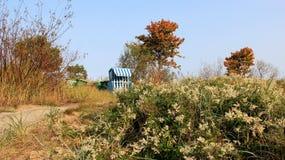 Άνθιση με το τοπίο φθινοπώρου στοκ φωτογραφία
