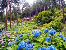 Άνθιση λουλουδιών στον ιαπωνικό κήπο Στοκ φωτογραφία με δικαίωμα ελεύθερης χρήσης