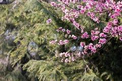 Άνθιση λουλουδιών την άνοιξη στα δέντρα Στοκ Φωτογραφίες