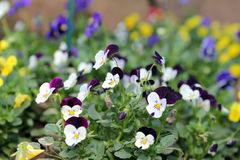 Άνθιση λουλουδιών το πρωί Στοκ φωτογραφία με δικαίωμα ελεύθερης χρήσης