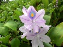 Άνθιση λουλουδιών το πρωί Στοκ Εικόνες