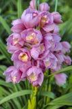 Άνθιση λουλουδιών Στοκ Εικόνα