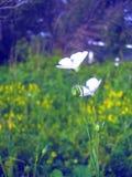Άνθιση λουλουδιών Στοκ εικόνες με δικαίωμα ελεύθερης χρήσης
