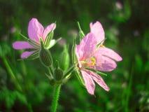Άνθιση λουλουδιών Στοκ φωτογραφίες με δικαίωμα ελεύθερης χρήσης