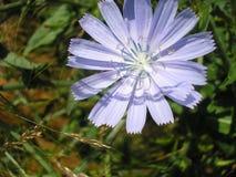 Άνθιση λουλουδιών Στοκ Φωτογραφίες