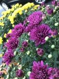 άνθιση φθινοπώρου Στοκ εικόνα με δικαίωμα ελεύθερης χρήσης